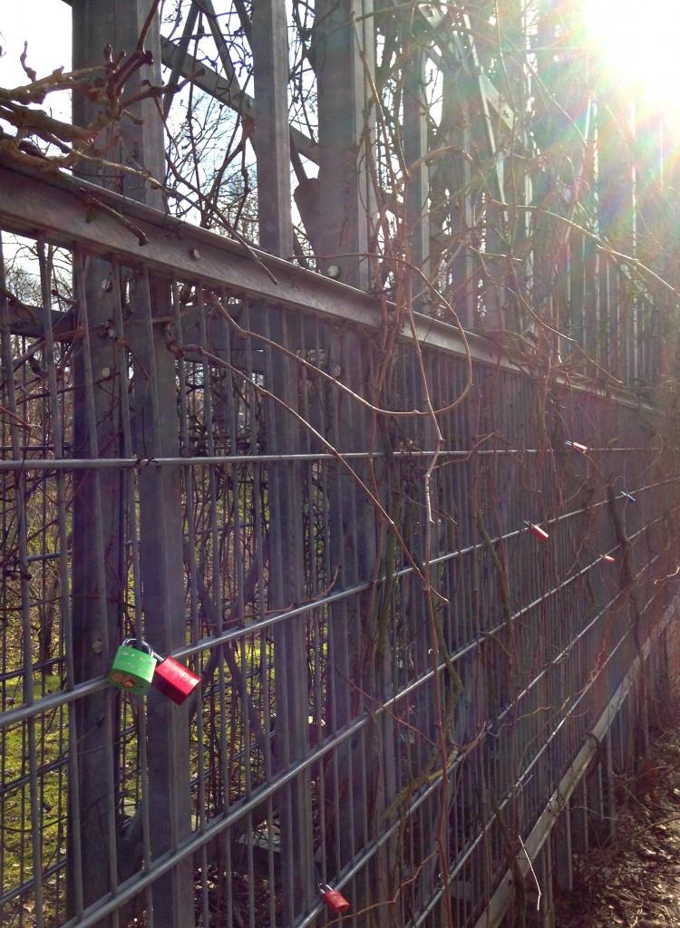 An einem Gerüst in der Stadtmauer in Neubrandenburg hängen seit Neuestem auch die allseits beliebten Liebesschlösser.